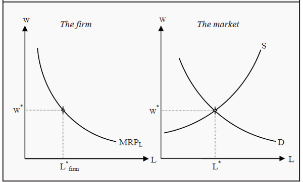 The Firm's Demand for Labor and the Market Equilibrium