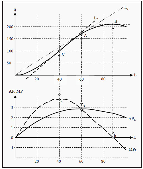 The Production Function with Average and Marginal Product